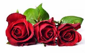 Best red rose background wallpapers desktop wallpaper backgrounds