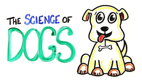 science of dogs the science of dogs viyoutube