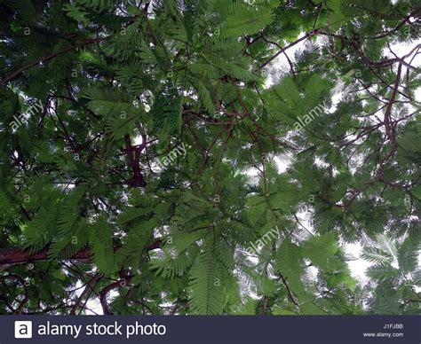 fern like leaves stock photos fern like leaves stock