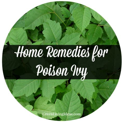 home remedies for poison how to avoid it