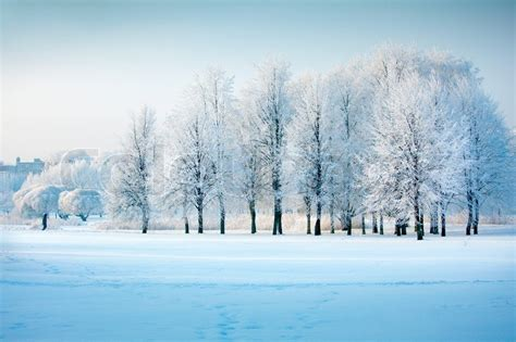 Home Plans With Prices Winter Trees Stock Photo Colourbox