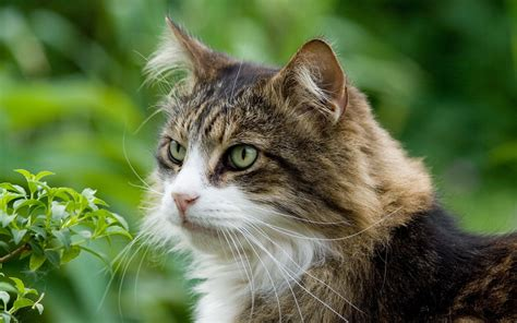 wallpaper de chat cat looking at nature4k wide hd backgrounds hd wallpapers