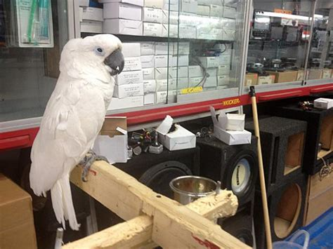 bronx auto shop doubles as exotic bird store university