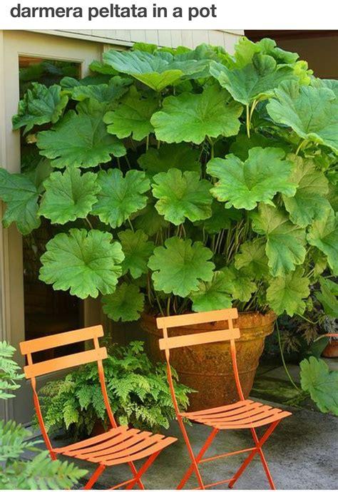 piante da ombra in vaso piante da giardino ombra best piante with piante da