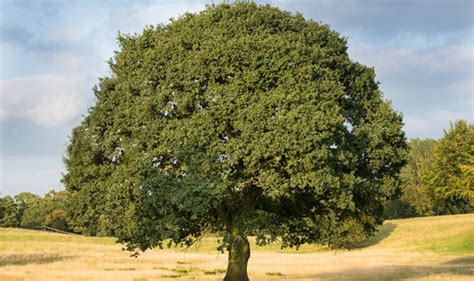 top 10 pictures of trees for day top 10 facts about oak trees top 10 facts style