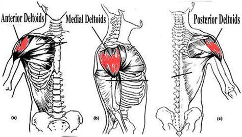 esercizi spalle a casa esercizi deltoidi allenare le spalle in modo efficace