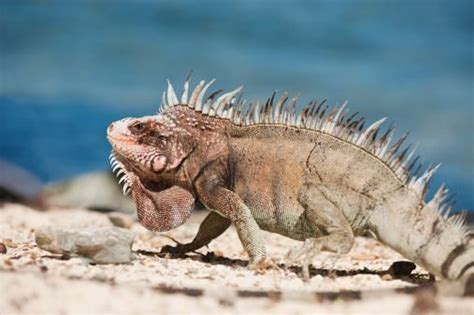 tropical desert animals and plants tropical rainforest and desert biomes thinglink