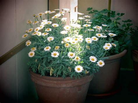 Pot Flowers Kaleng gambar inspirasi taman rumah minimalis cantik barang bekas