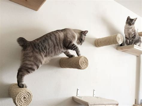 amache per gatti mobili per gatti percorsi lettini tiragraffi amaca parete