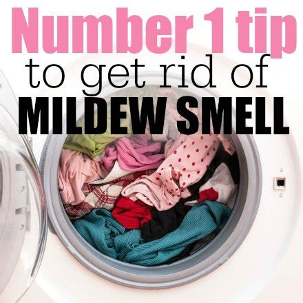 my house smells musty do i have mold how to get rid of mildew smell with just 1 ingredient coupon closet