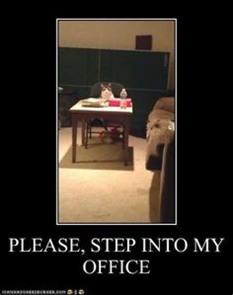 Step Into Office by 1000 Images About Ainmals On Cats