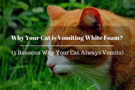 throwing up white why your cat vomiting white foam 5 reasons why your cat always vomits