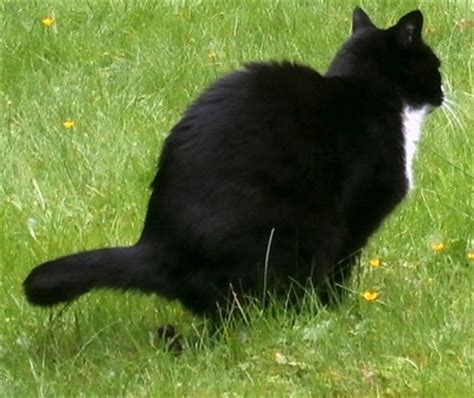 Katzen Im Garten 2523 by Katzen Im Garten Katzen Im Garten Wandkalender 2018 Din