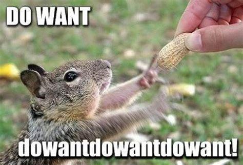 Squirrel Nuts Meme - funny squirrel memes