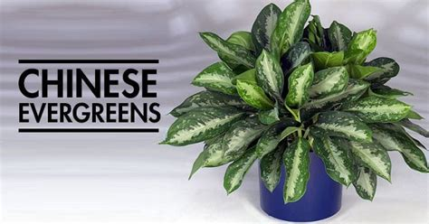 houseplants that don t need sunlight 12 aesthetic plants that don t require sunlight and can