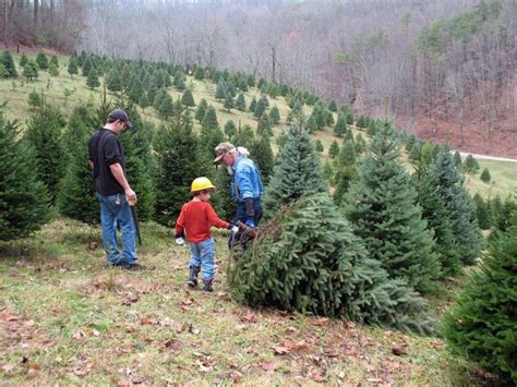 heinerman tree farm wv awesome picture of tree farms in wv fabulous homes interior design ideas