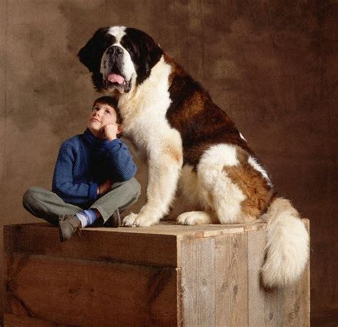 beethoven breed 5 large and fluffy breeds for families who want more to