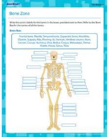 bone zone printable human anatomy worksheet for 5th