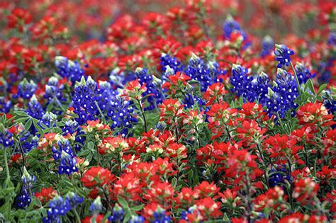 wildflower bed and breakfast texas wildflower wallpaper wallpapersafari