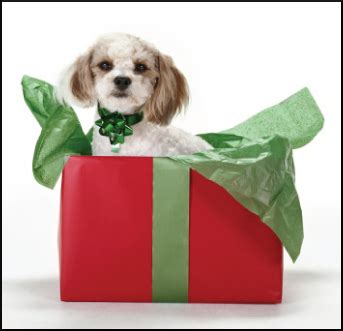 pered puppy dogs gifts 28 images the best birthday gifts for dogs all about and for dogs gifs