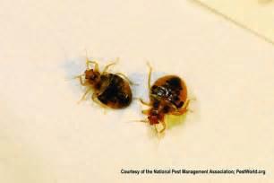 terminix bed bugs bed bugs terminix pest