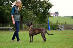 school  dog trainers   dog trainer az dog