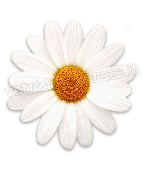 fiori margherite margherite in adesivo vetrofania e calpestabile