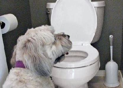 how to get puppy to drink water how to stop your from the toiletanti dogs anti dogs