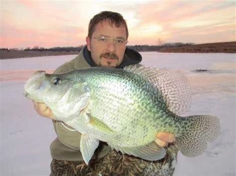Records Nebraska Potential Record Crappie By Fishermen