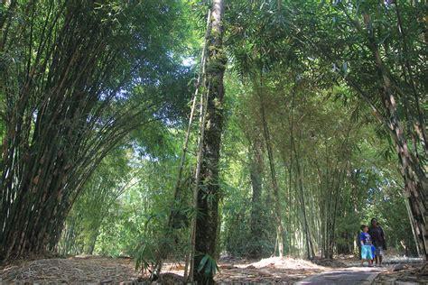 mongabay travel menikmati tanaman berbicara  kebun