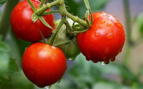 l fruit et legume fruit ou l 233 gume quelle diff 233 rence