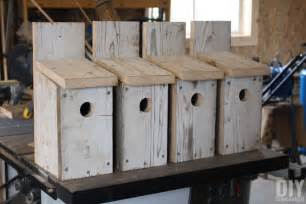 building bluebird bird houses how to build a bird house