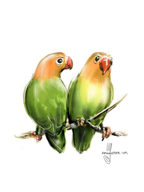 For Lovebird birds lovebirds