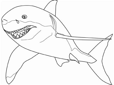 large shark coloring page shark coloring pages coloring pages for children