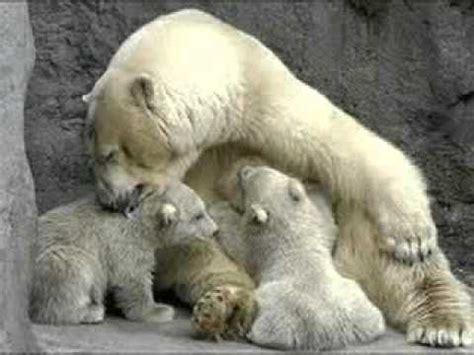 imagenes de animales viviparos los animales nacen youtube