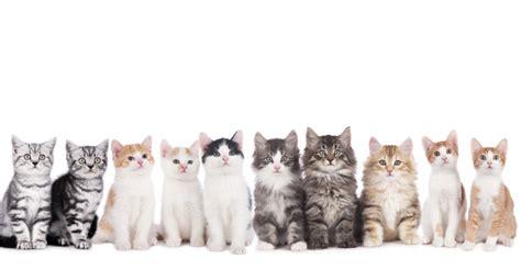 welches haus passt zu mir welche katze passt zu mir deine tierwelt de magazin