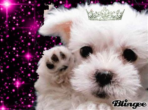 puppy princess princess puppy picture 126215988 blingee