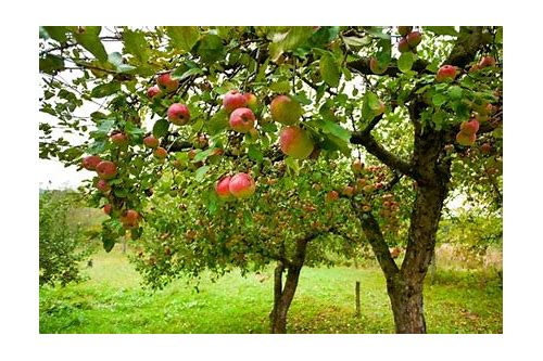 fruit trees deals