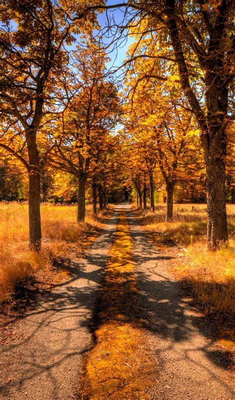 country road   autumn season