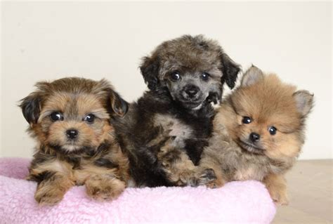 puppy stores orlando justpuppies net better puppies better prices better hurry