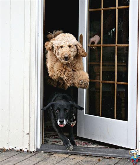 uscire di casa cani felici di uscire di casa foto di superedo it