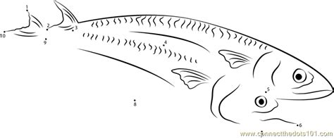 king mackerel coloring pages mackerel coloring page free printable pages sketch