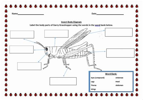 Grasshopper Dissection Worksheet Answers by Resources For Teachers Sneha Nayakam