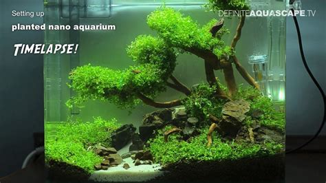 setting up planted nano aquarium timelapse