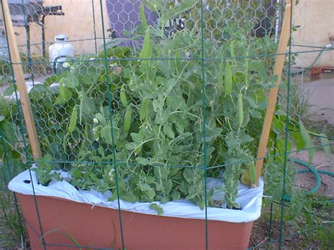 Container Gardening Guide - container gardening 15 vegetables to easily grow indian lifestyle lifestyle guide better