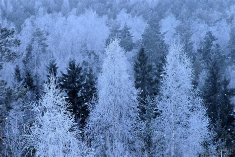 Tree Frosted - image frosted trees at daybreak stock photo by jf maion