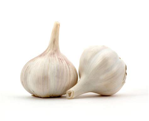 piantare aglio in vaso coltivare l aglio in vaso la semina si fa ad ottobre