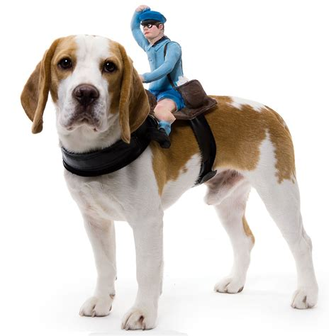pet dogs riders pet costumes the green