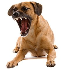 growling puppy understanding dogs