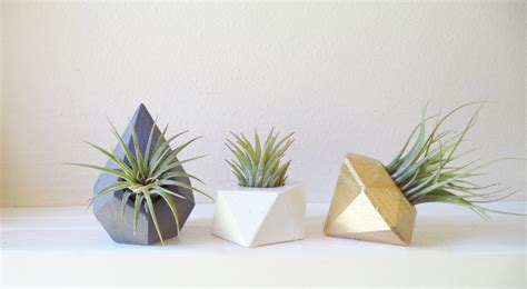 Air Plant Planters by Mini Plant Wedding Favors Small Air Plant Holders Modern